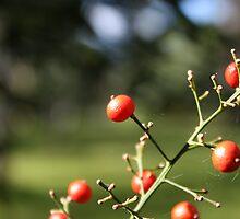 Berries by Philip Alexander