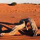 Driftwood in the middle of the desert. by Jodi Webb