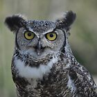 Cisco - Great Horned Owl by Poete100