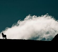 Stallion on Ridge by Chinua Ford