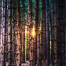 A Light in the Trees by Nigel Bangert