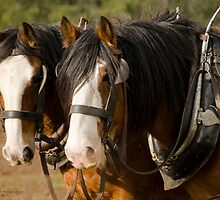 Clydesdale Brothers by James Vereker