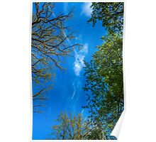 Trees And Sky 1 Poster