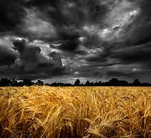 Summer Harvest. by maxblack