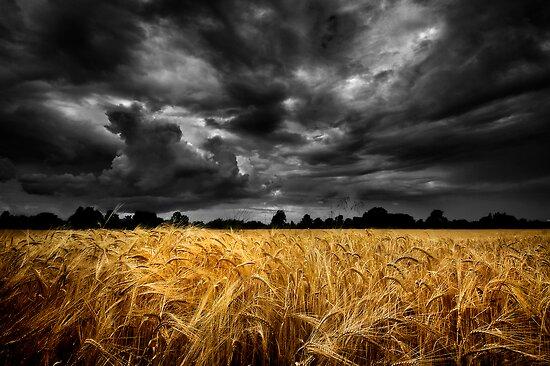 Summer Harvest. by maxblack