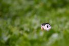 Peek-a-boo by David Lewins