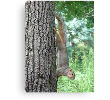 Super Squirrel Canvas Print