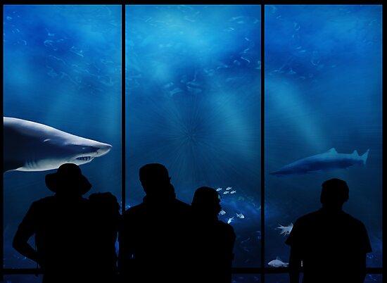 At the aquarium...   by Nathalie Chaput