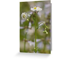 Robin's Plantain Greeting Card