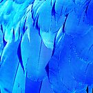 Blue Wonder by Goldenspirit