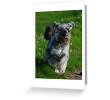 Poppy let loose Greeting Card