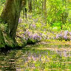 Wisteria Along the River by Mary Campbell