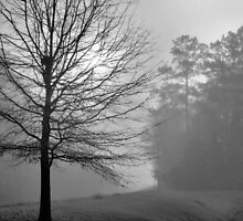 Morning Fog by ©Dawne M. Dunton