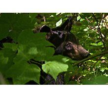 Black Bear Photographic Print