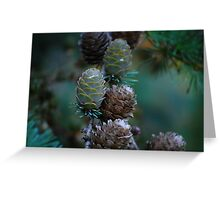Young pine cones Greeting Card