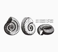 Logarithmic spirals in shells by funmaths