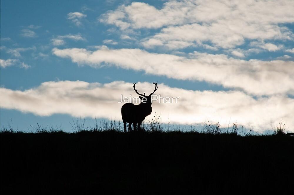 Deer by Jaime Pharr