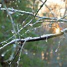 Icy Morning by ©Dawne M. Dunton