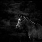Dark Horse by Heather Last