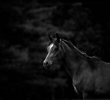 Dark Horse by Heather Last