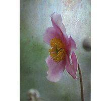 Japanese Anemone Photographic Print