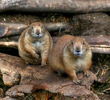 Chubby Pair by Larry Trupp
