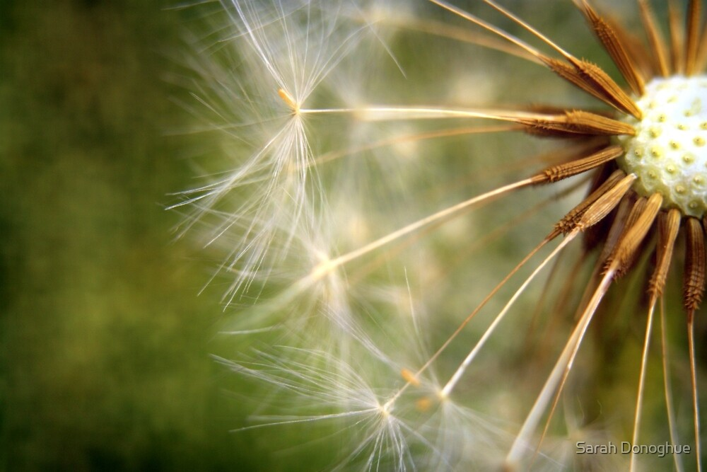 Make A Wish by Sarah Donoghue