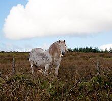Horse by Jaime Pharr