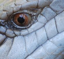Eye of the Blue Tongue Lizard by Brandie1