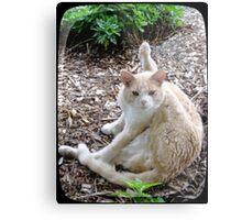 Buddy the Cat Metal Print