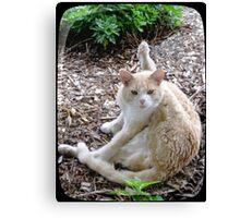 Buddy the Cat Canvas Print