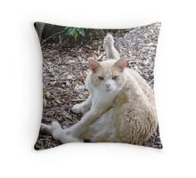 Buddy the Cat Throw Pillow