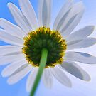 Sunny side up by Sheri Nye