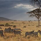 Serengeti Afternoon by Greg Nairn