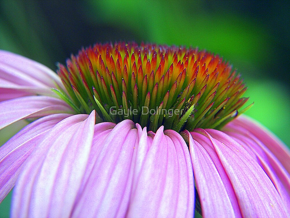 Coneflower Crown by Gayle Dolinger