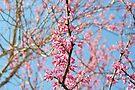 Blooming Spring Buds by ©Dawne M. Dunton