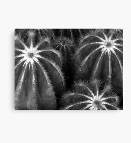 Cacti in Monochrome Canvas Print