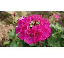 Flower #4 Photographic Print