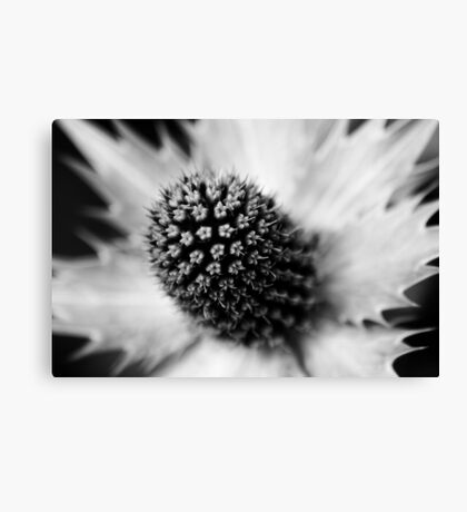 Heart of the White Explosion in Monochrome Canvas Print