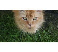 Scratch the Tabby Cat Photographic Print