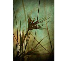 Seagrass Dreams Photographic Print