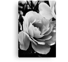 White rose in monochrome Canvas Print