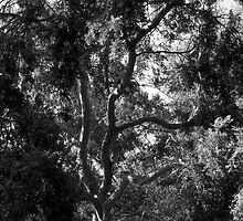 A Study of Light and Shadow in Black and White: Tree With Beautiful Foliage by Ivana Redwine