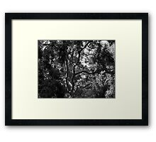 A Study of Light and Shadow in Black and White: Tree With Beautiful Foliage Framed Print