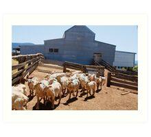 Shearing Shed - Swifts Creek, Australia Art Print