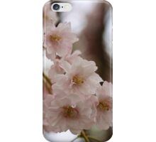 Weeping cherry tree blossoms - South Haven, MI iPhone Case/Skin