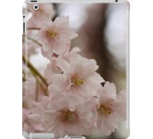 Weeping cherry tree blossoms - South Haven, MI iPad Case/Skin