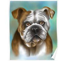 Bulldog Inglese Poster