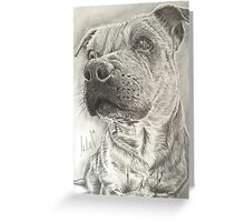Staffy Greeting Card