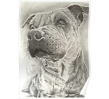 Staffy Poster